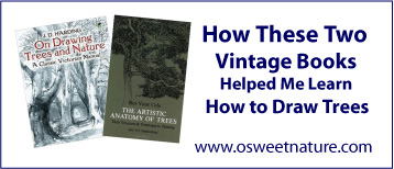 How these two vintage books helped me learn how to draw trees.